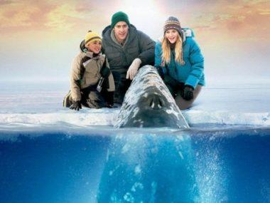 Все любят дельфинов Big Miracle