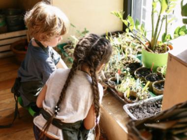 Как сделать школу «зеленой»