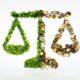 Поправки в Конституцию глазами экологиста EcoDao ЭкоДао