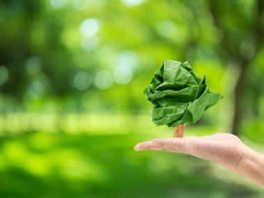 «Бумага» об экологии